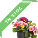 in-stoc